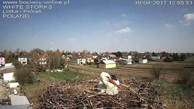 White Storks on Cam in Poland - a webcam in Poland, Europe