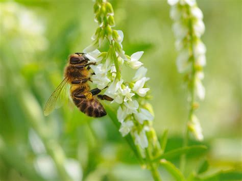 (Bumble)bees at work – Cute wallpapers