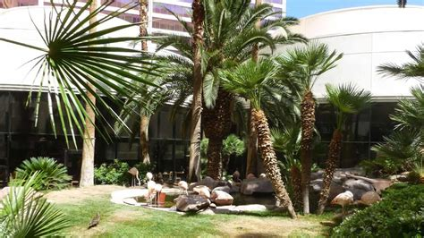 Wildlife Habitat at the Flamingo - Vegas Food & Fun