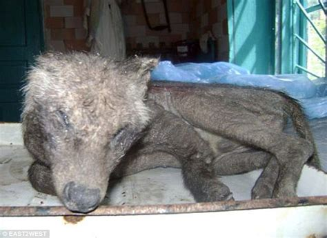 Fabled 'Chupacabra' or mutant fox poisoned by radiation