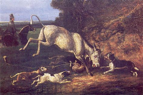 Donkey-baiting - Wikipedia