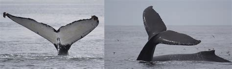 Monterey Bay Whale Watching with Sanctuary Cruises