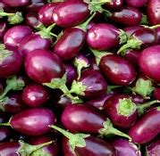 All you wanted to know about Bt brinjal - Rediff
