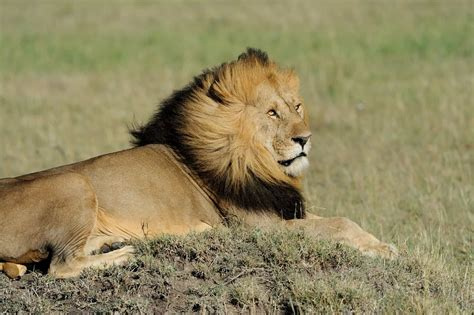 Captive lion breeding in South Africa: The case for a