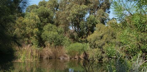 How urban bushland improves our health and why planners