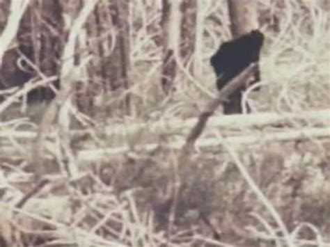 BIGFOOT Real Video Sasquatch Unknown CREATURE Wild MONSTER